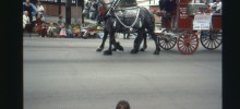 Draft Horses in Bicentennial parade
