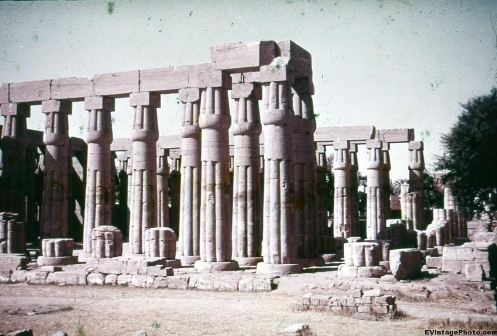 Papyrus Pillars
