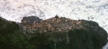 Sea Lions at Sea Lion Caves, Florence Oregon