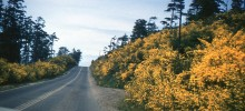 Oregon Coastal Road